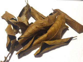 black guava leaves