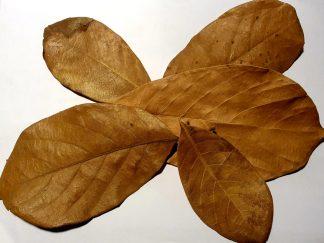 jack/jackfruit leaves